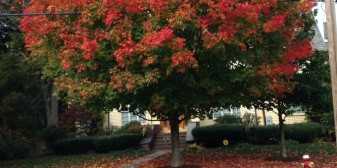 Beautiful trees are one reason we live in Newton