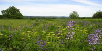 LWLA_Native-WildflowerMeadowinSpring