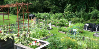 Shared Harvest winter CSA Shares Available for Winter