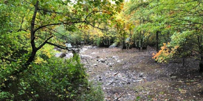 Webster Woods